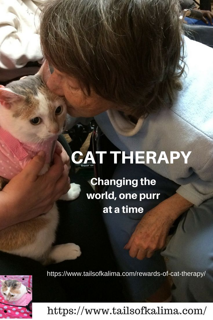 The Rewards Of Cat Therapy Therapy Cat Beautiful Cats Cats Cast