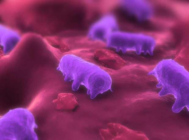 A febre tifoide tem entre os sintomas mais clássicos o aumento do volume do baço. Conheça os sintomas, as causas e o tratamento da febre tifoide.