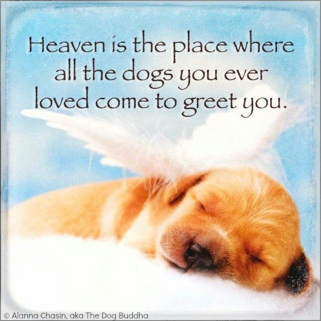 Dog Angel Quotes: Dogs In Heaven Quotes. QuotesGram
