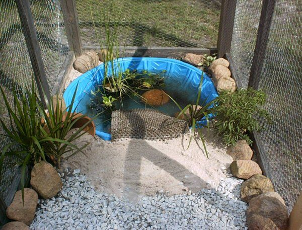 Kiddie pool turtle habitat