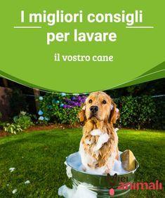 1080 best cuccioli images on pinterest - Come fare il bagno al cane ...