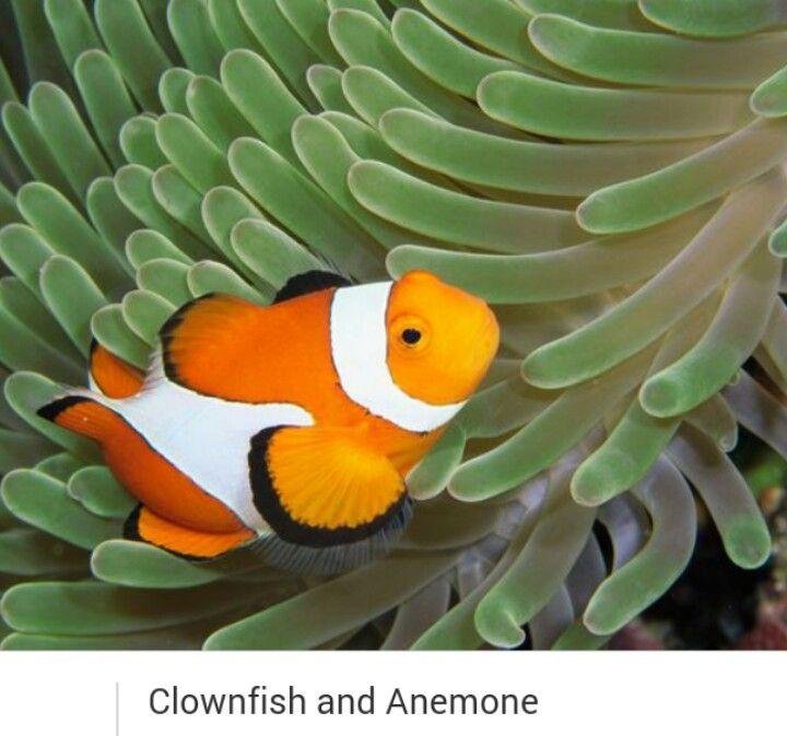 36 besten sea life Bilder auf Pinterest | Fische, Fisch kunst und ...