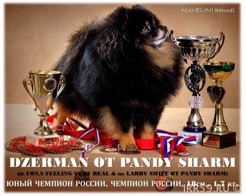 Милейший мальчишка - Россия , Пермский край , Пермь | Бесплатные объявления