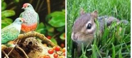 Yaban hayvanlarına meyve bahçesi