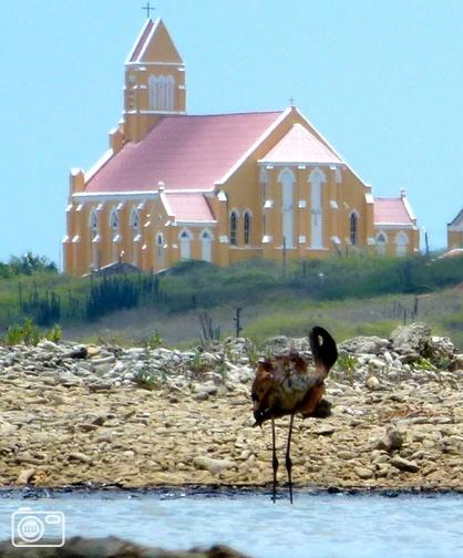 Olieramp natuurgebied Jan Kok op Curaçao  CURAÇAO - Ruwe Olie van de Isla heeft de zoutpannen van Jan Kok bereikt na een enorme lekkage. Flamingo's onder de olie voor de kerk van Willibrordus.