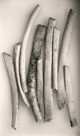 "Irving Penn's ""Bird Bones"" // photo courtesy of Pace/MacGill"