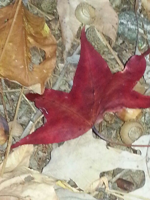 Stacy Poole -fall texture/leaves