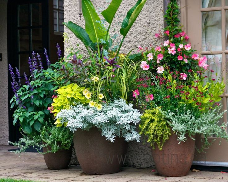 Kellough residence  Perennial  flowers  potted  container gardening   landscape design  patio plants  l POT Incorporated. 17 Best images about Patio Flowers on Pinterest   Container