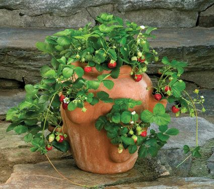 why not use it for what its for? wild strawberries in a strawberry pot! who'da thunk?