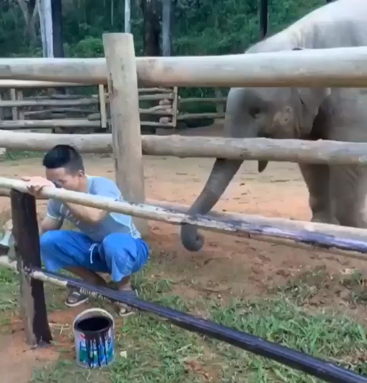 🐘Dude! play with me
