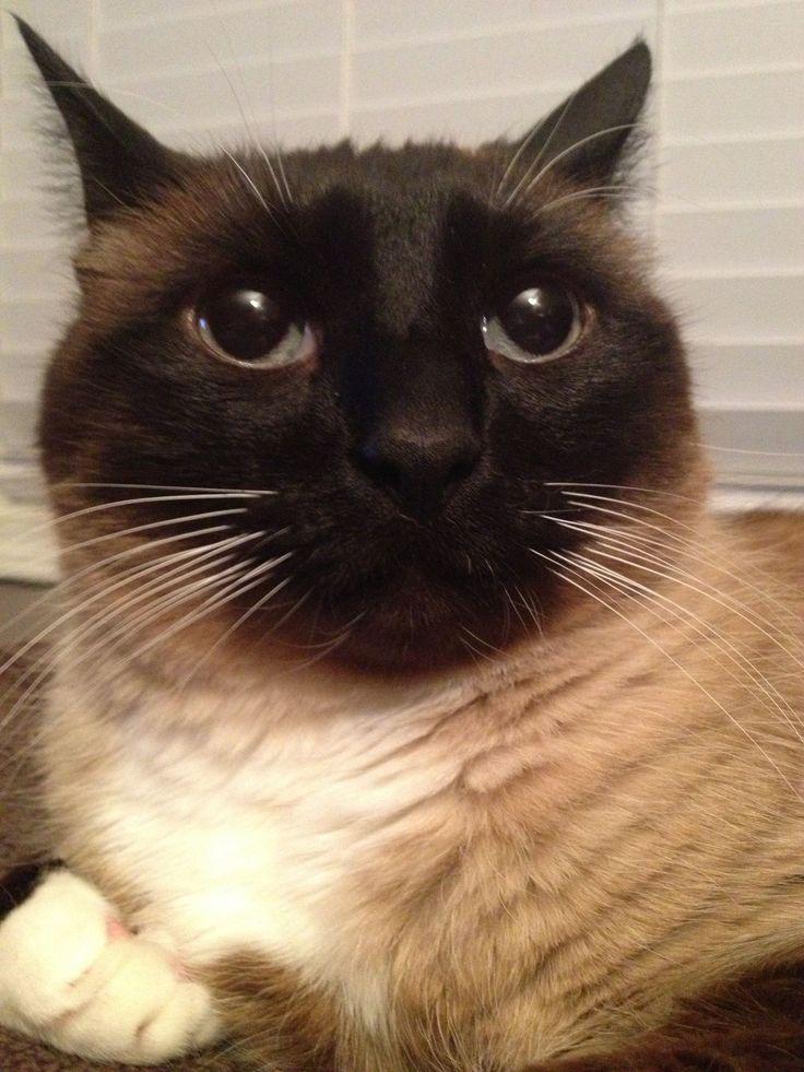 surprised cat Blank Meme Template Cats, Meme template