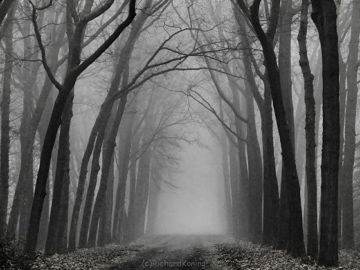 Mist en vorst bospad [11dec13] Lochem NL Foggy en Frosty lane in the woods