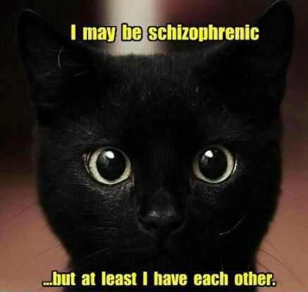 This totally describes my youngest cat. She's a library of personalities.