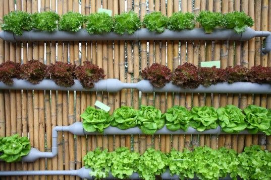 The fence behind this fab garden protects the lettuce. Use gutters: Drill holes for drainage, add potting soil, and tuck your plants in. Ensure that plants don't require a lot of root space. | Grow Up! How to Design Vertical Gardens for Tiny Spaces | Inhabitat - Sustainable Design Innovation, Eco Architecture, Green Building | Tiny Homes