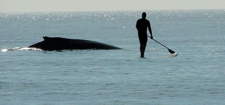 North Carolina Coastal Federation: A Close Encounter With a Humpback Whale