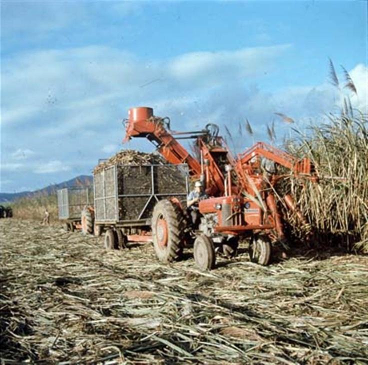 Sugar harvesting Mossman Cairns Queensland Australia 1969.