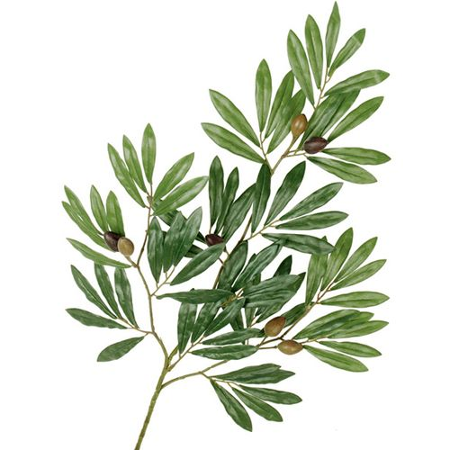 olive tree branch - Google Search