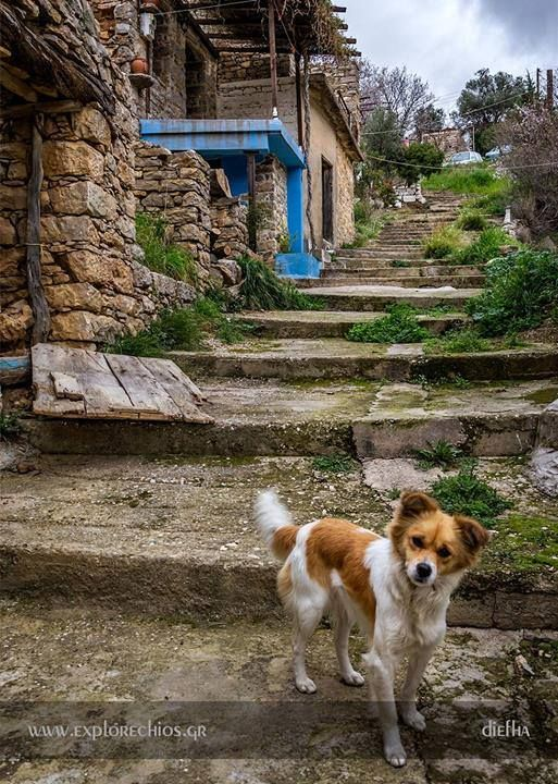 At the small mountainous village of Diefha in Chios