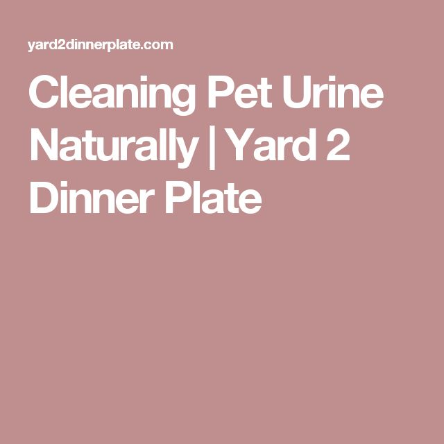 Dog Urine Smell In Wool Carpet: Best 25+ Cleaning Pet Urine Ideas On Pinterest