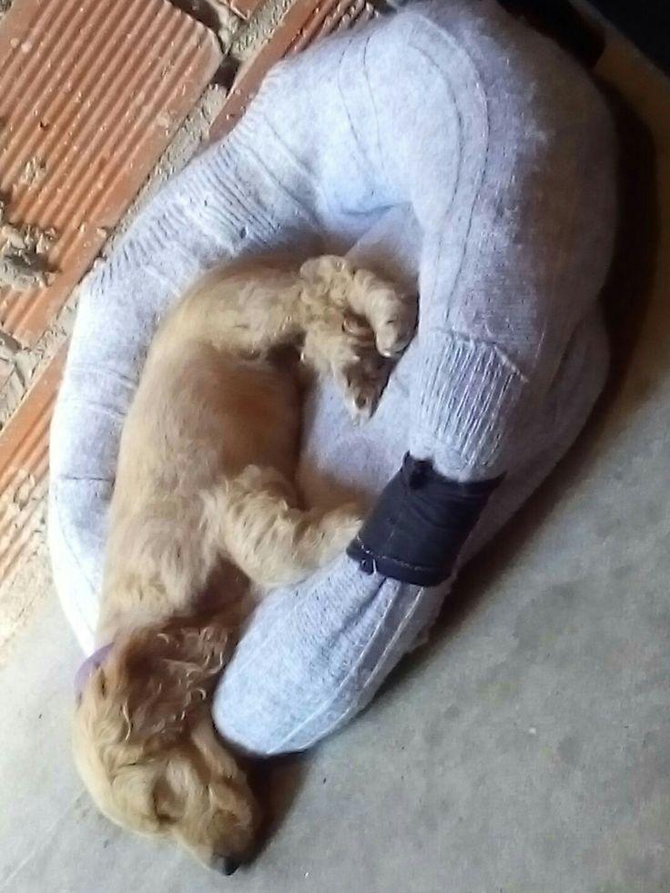 Cama para perro, suéter reciclado!!!