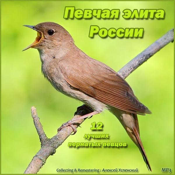 Голоса птиц дятел скачать бесплатно mp3