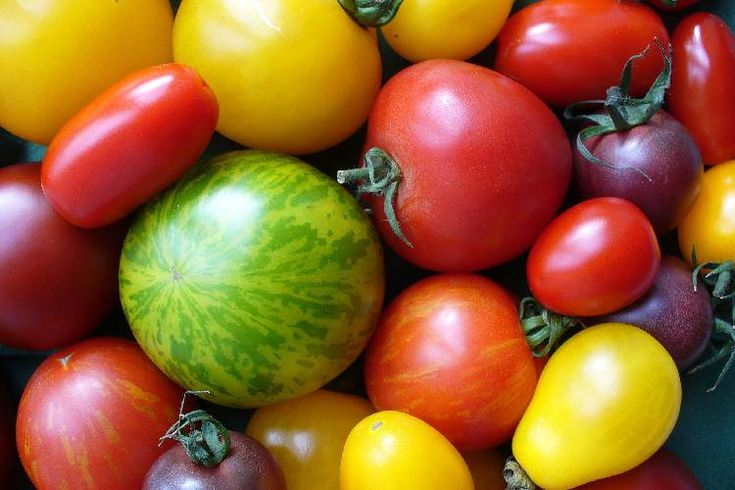 ber ideen zu tomaten z chten auf pinterest tomatenpflanzen g rtnern und gem segarten. Black Bedroom Furniture Sets. Home Design Ideas