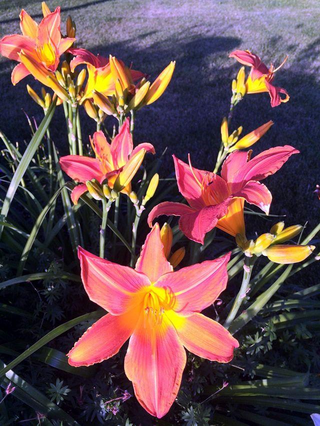 Flower Garden Ideas Illinois 1750 best garden ideas images on pinterest | beautiful gardens