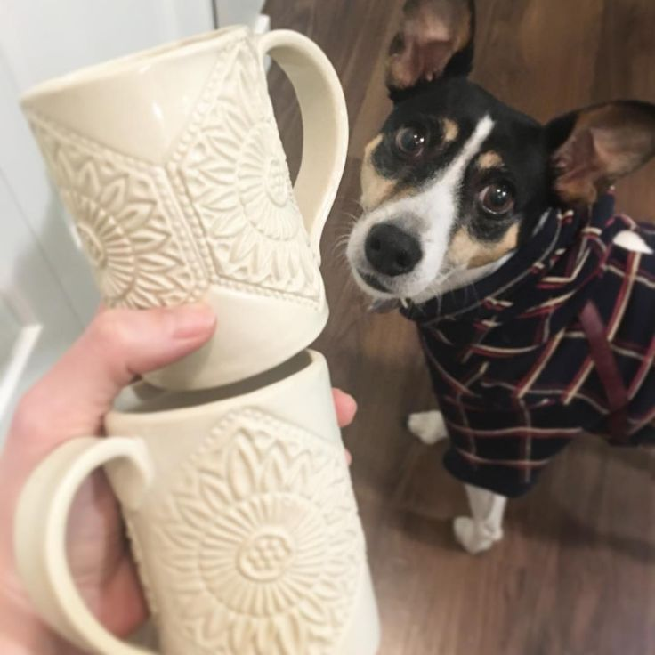 Lexi wont help me decide if I like the shiny clear or matte white glaze... neither hold biscuits so her opinion is withheld.  #stoneware #pottery #ceramics #clay #handmade #handmadeisbetter #ceramica #ceramic #keramik #shoplocal #vancouver #instapottery #potterystudio #iloveclay #dogsofinstagram #dogs via: #probeatzpromo