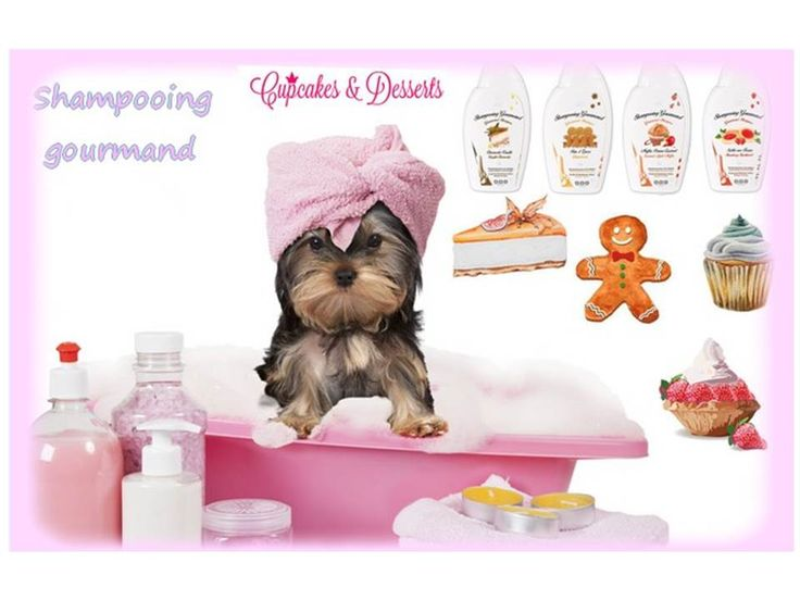 Shampooing gourmand pour chien Dog Generation https://www.cupofdog.fr/