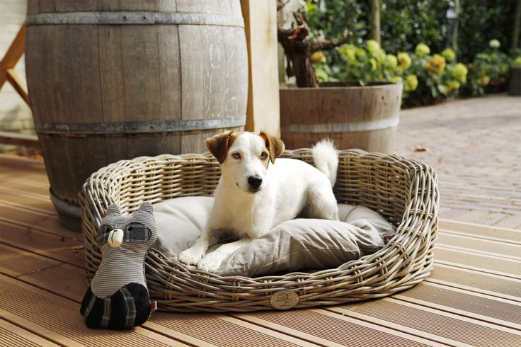 Ons nieuwe fotomodel in de kubu hondenmand uit de nieuwe Designed by Lotte collectie!