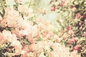 background photography