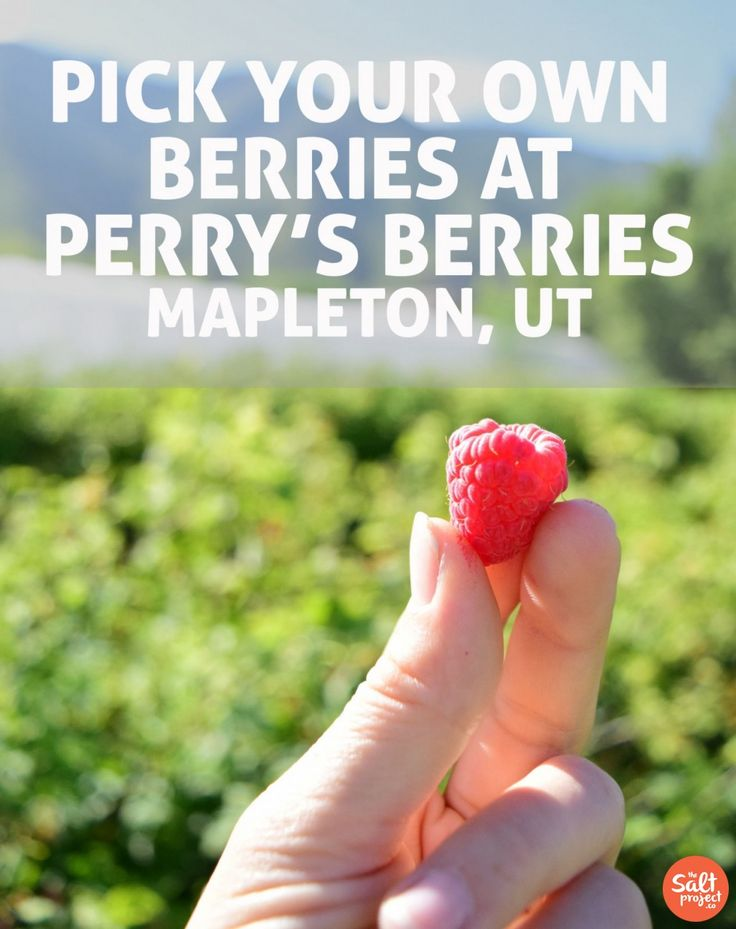 Perry's Berries | Grubbin' | Adventurin' | The Salt Project | Things to do in Utah with kids