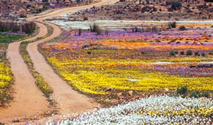 Roadside, Namaqualand