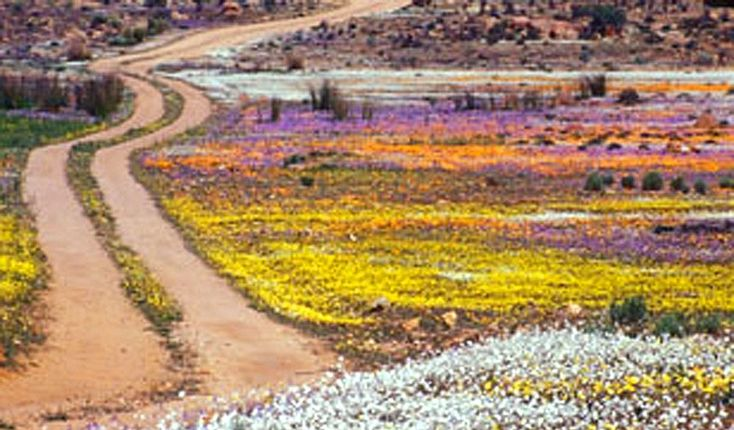 Roadside, Namaqualand