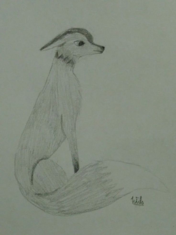 Best fox picture drawn by a 13 year old