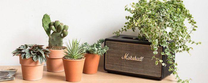 La décoration végétale est une tendance phare de cette année 2017. Vous aimez ?