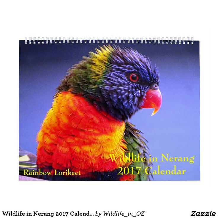 Wildlife in Nerang 2017 Calendar - Australian Wildlife. Click on photo to view item then click on item to see how to purchase that item. #wildlife #lorikeet #rainbowlorikeet #calendar #zazzle
