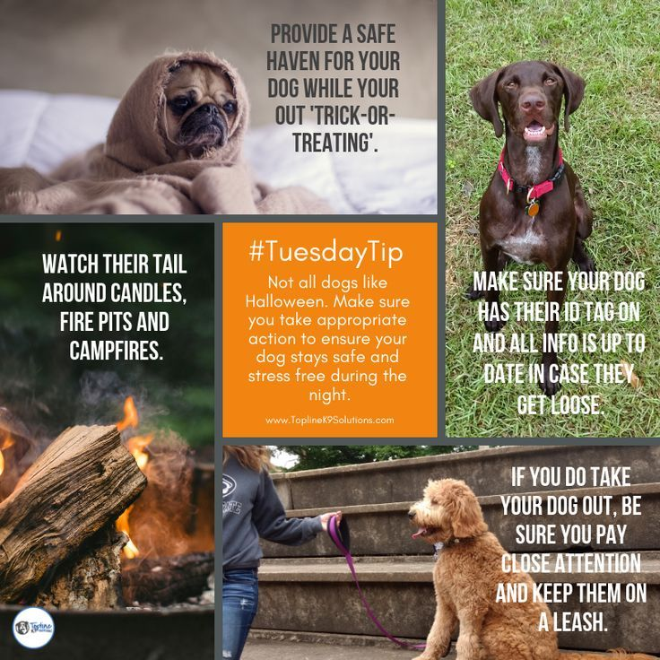 Not All Dogs Like Halloween Make Sure You Take Appropriate Action To Ensure They Are Safe And Stress Free Throughout The Ev Dog Training Dogs Socializing Dogs