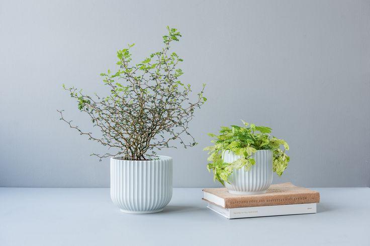 Lungby: enkelt, stilrent og likevel unikt. Du finner utvalget i din Designforevig-butikk!