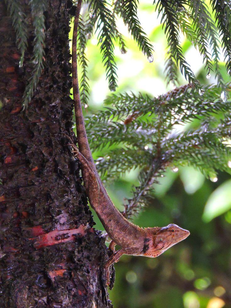 Explore##Wildlife##northeast##india##www.neroutes.com