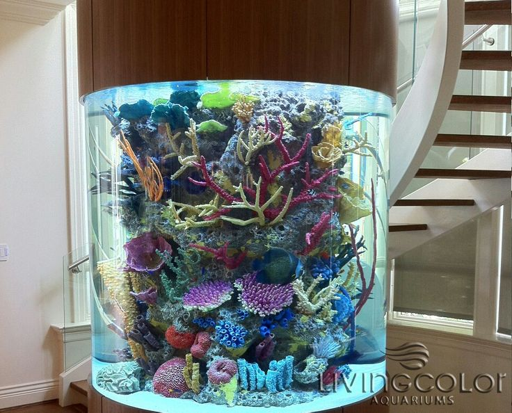 Acrylic Tank Manufacturing By Living Color Aquariums