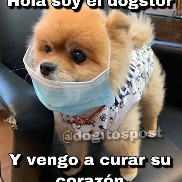 Humor Chistes Chiste Risas Memes Risasinmas Memes Perros Memes Animales Humor De Animal