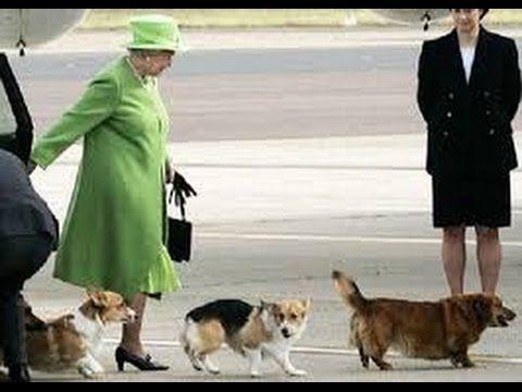 Права животных в Англии # Влог на озере