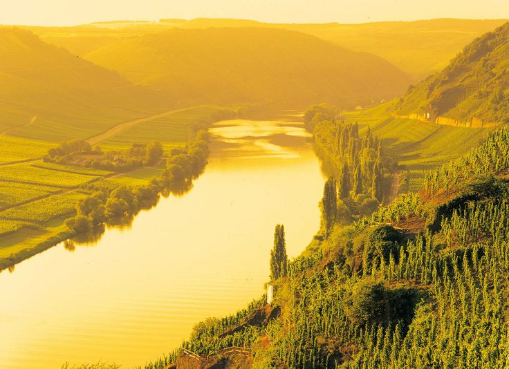 Moselle River. Winegrowing regions don't get much better than this! #Germany