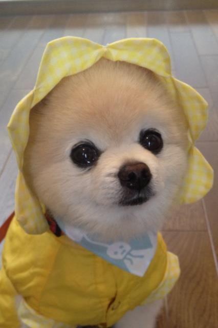 Sunshine dog