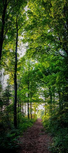 The Beaten Path Pano | Flickr - Photo Sharing!