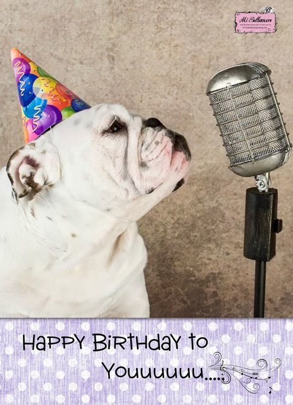 Pin By Jenny On Happy Birthday Memes Bulldog Happy Birthday Happy Birthday Funny Humorous Happy Birthday Art