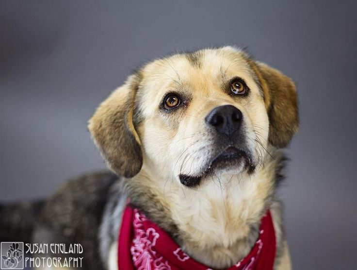Meet UNAPPRECIATED, a Petfinder adoptable Shepherd Dog | Circleville, OH | UNAPPRECIATED, is a male Shepherd mix about 1 year old. He was dumped out on the highway by his...