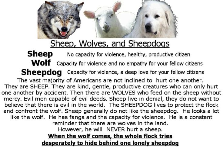 Essay on Sheep, Sheepdogs, and Wolves by Dave Grossman