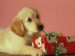 Can I open just this one?Diy Ideas, Puppies Pictures, Christmas Presents, Christmas Dogs, Christmas Morning, Labrador Puppies, Furries Friends, Christmas Gift, Pets Products